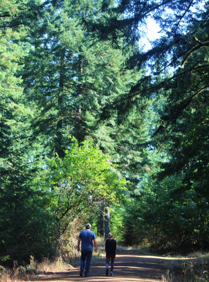 Two people walk along a trail surrounded by tall trees.